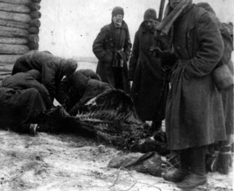 Советские военнопленные обдирают остатки мяса с трупа павшей лошади