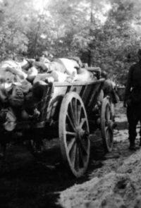 Тела умерших от голода и лишений советских военнопленных в лагерях временного содержания